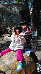 s-20170312動物園 亀にのる?.jpg